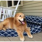 Pool and Patio Garden Gate Dog Bed Size: Medium (34