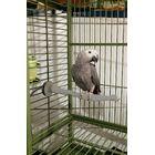 Heated Bird Perch Size: Large (2