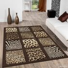 Chocolate Area Rug Rug Size: Rectangle 5'2