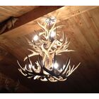 Doliya Antler Whitetail Double Tier 12-Light We have associated to option Chandelier Finish: Black/Sunbleached, Shade Color: Rawhide, Shade Included: Yes