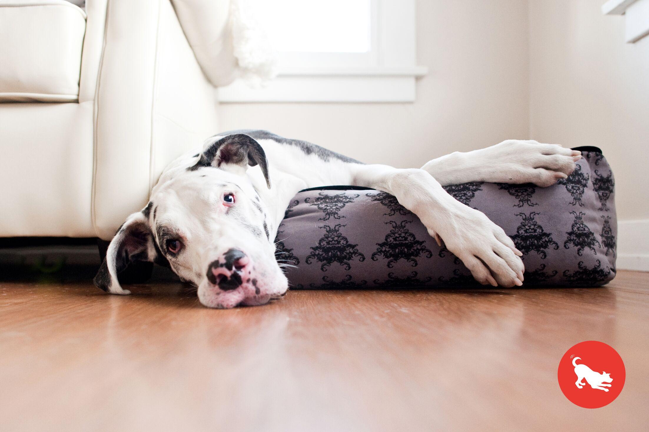 Martinez Royal Crest  Lounge Dog Sofa Size: Medium (31