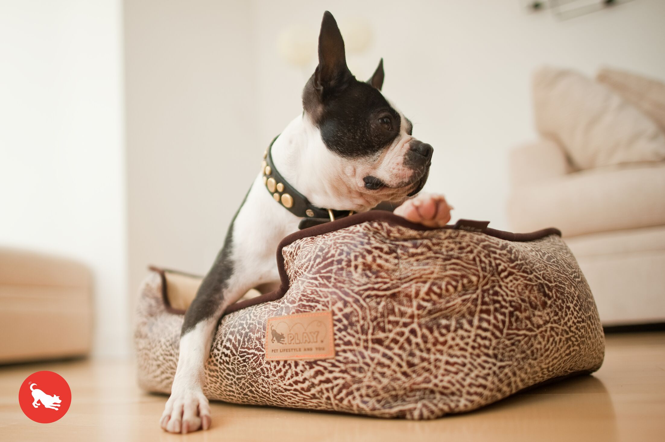 Original Savannah Lounge Dog Sofa Color: Sepia / Espresso, Size: Small (24