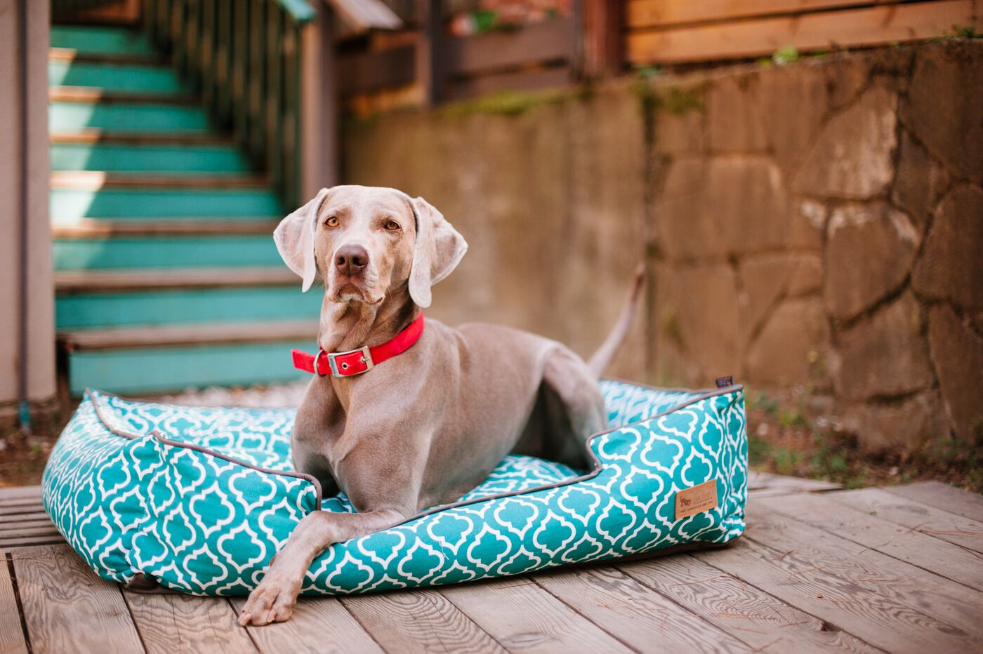 Moroccan Lounge Dog Bed Size: Medium (31