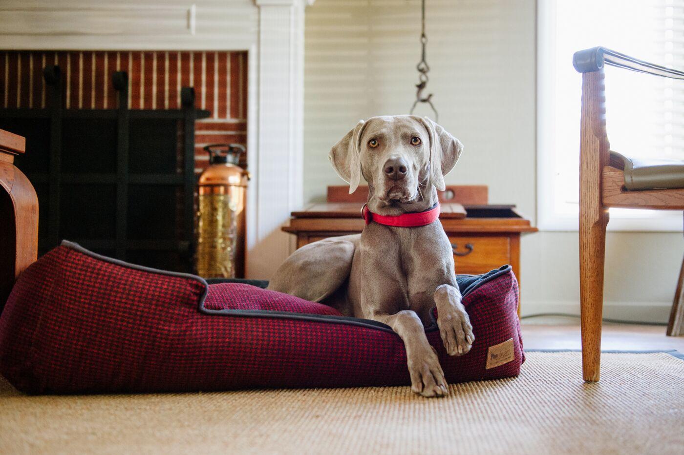 Houndstooth Lounge Dog Bed Size: Extra Large (44