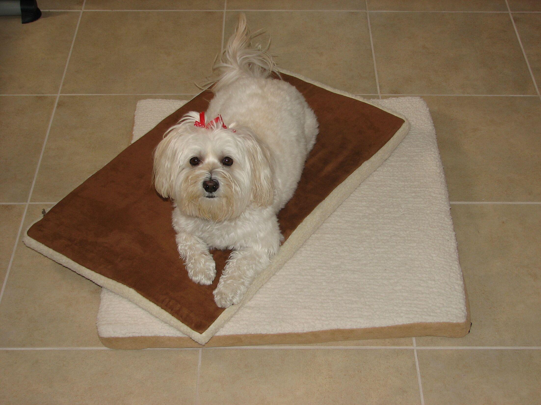 Dog Mat Size: Small (29.5