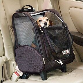 Wheel Around Travel Pet Carrier Size: Large (23