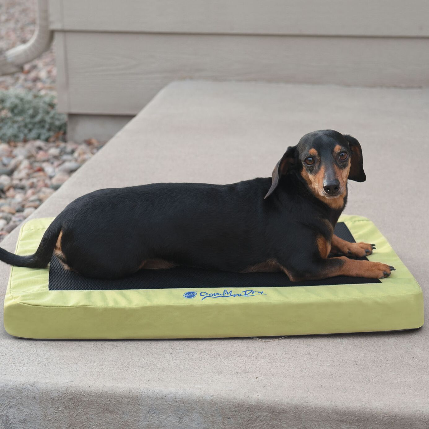Comfy n' Dry Indoor-Outdoor Pet Pad Size: Large (48