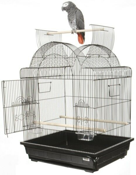 Open Play Top Victorian Small  Bird Cage Color: Black