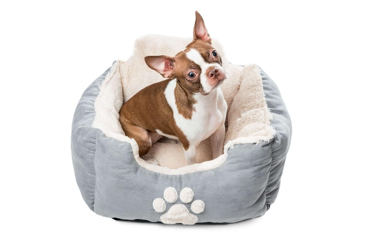 Roxi Large Square Pet Bolster with Comfortably Padded Size: Large, Color: Slate Blue