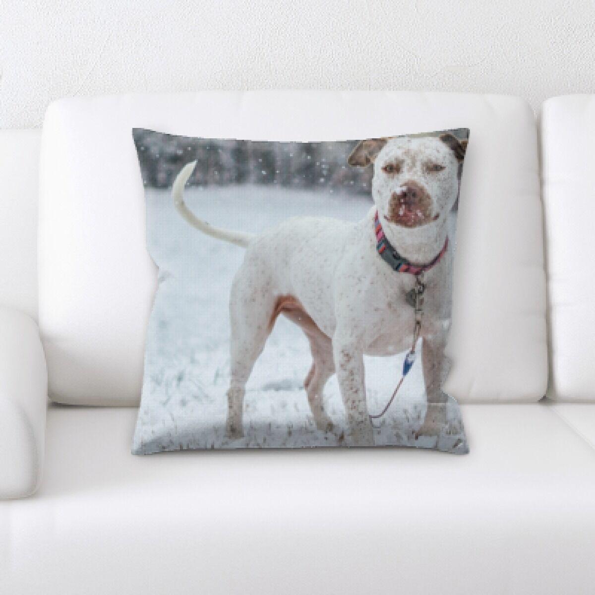 Kacey Animal (45) Throw Pillow