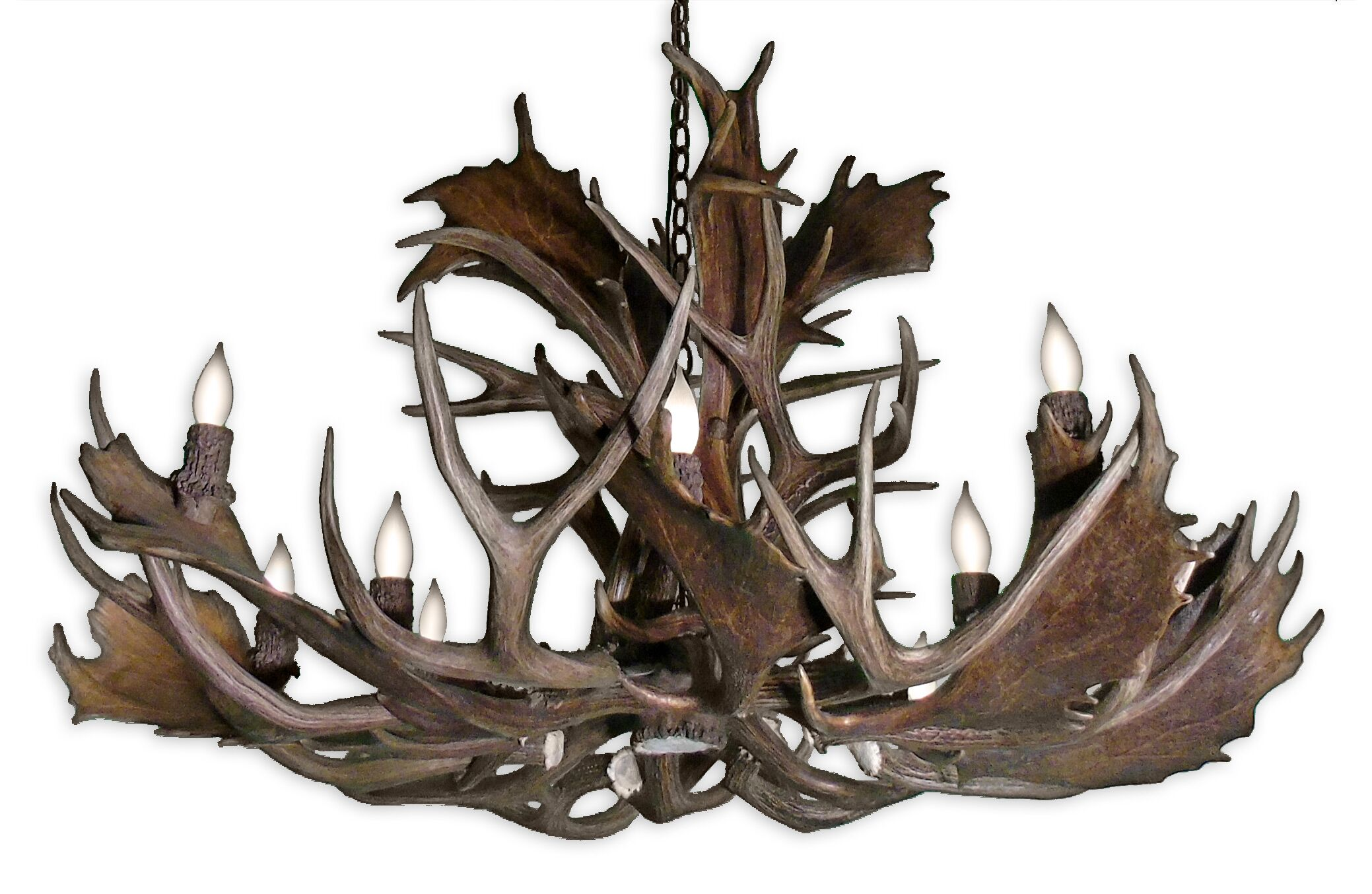 Prather Fallow 12-Light Novelty Chandelier Shade Color: No Shade, Finish: Rustic Bronze Chain/Natural Brown Antlers, Size: 24