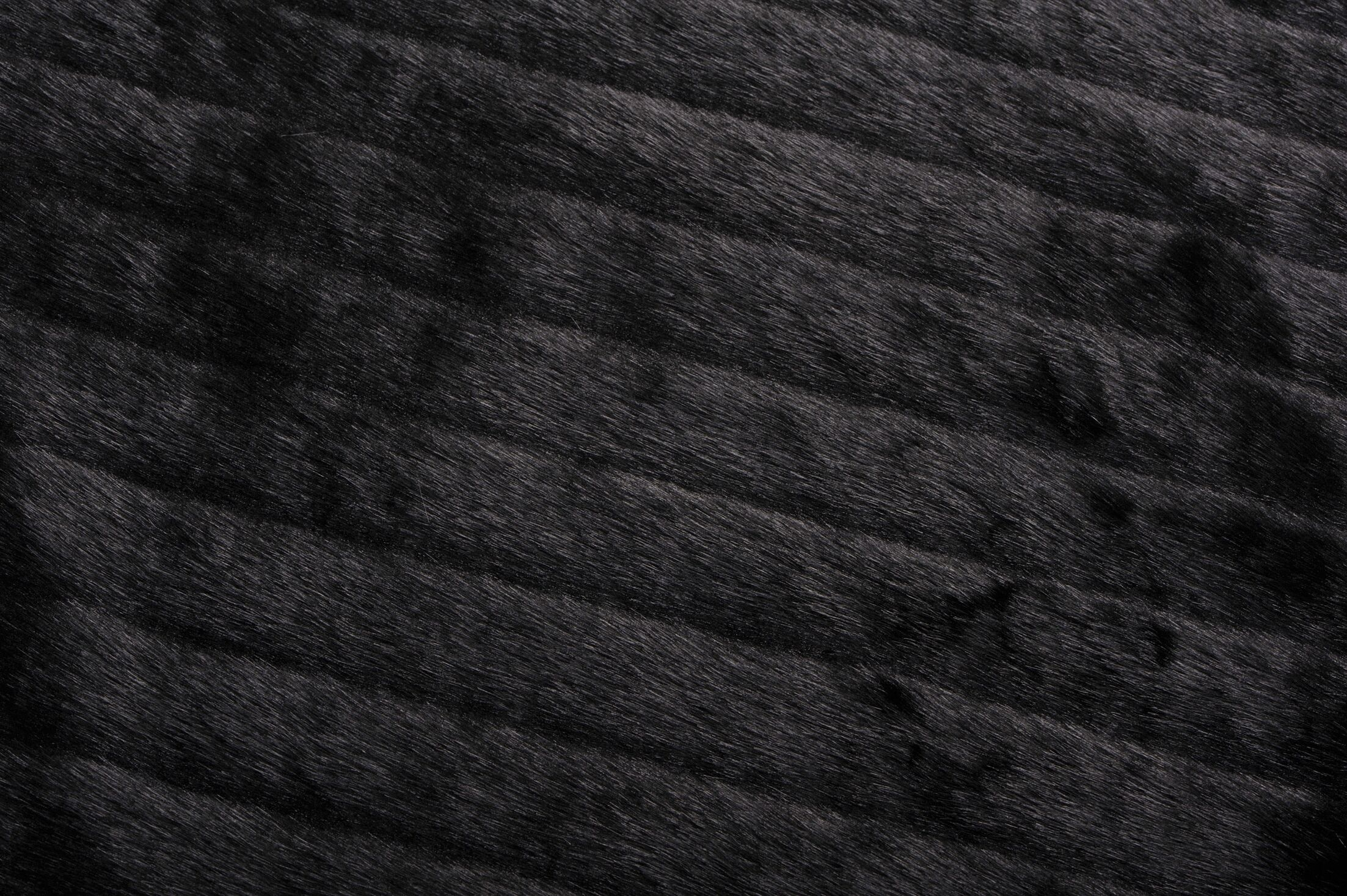 Cyra Black Area Rug Rug Size: Rectangle 5' x 7'