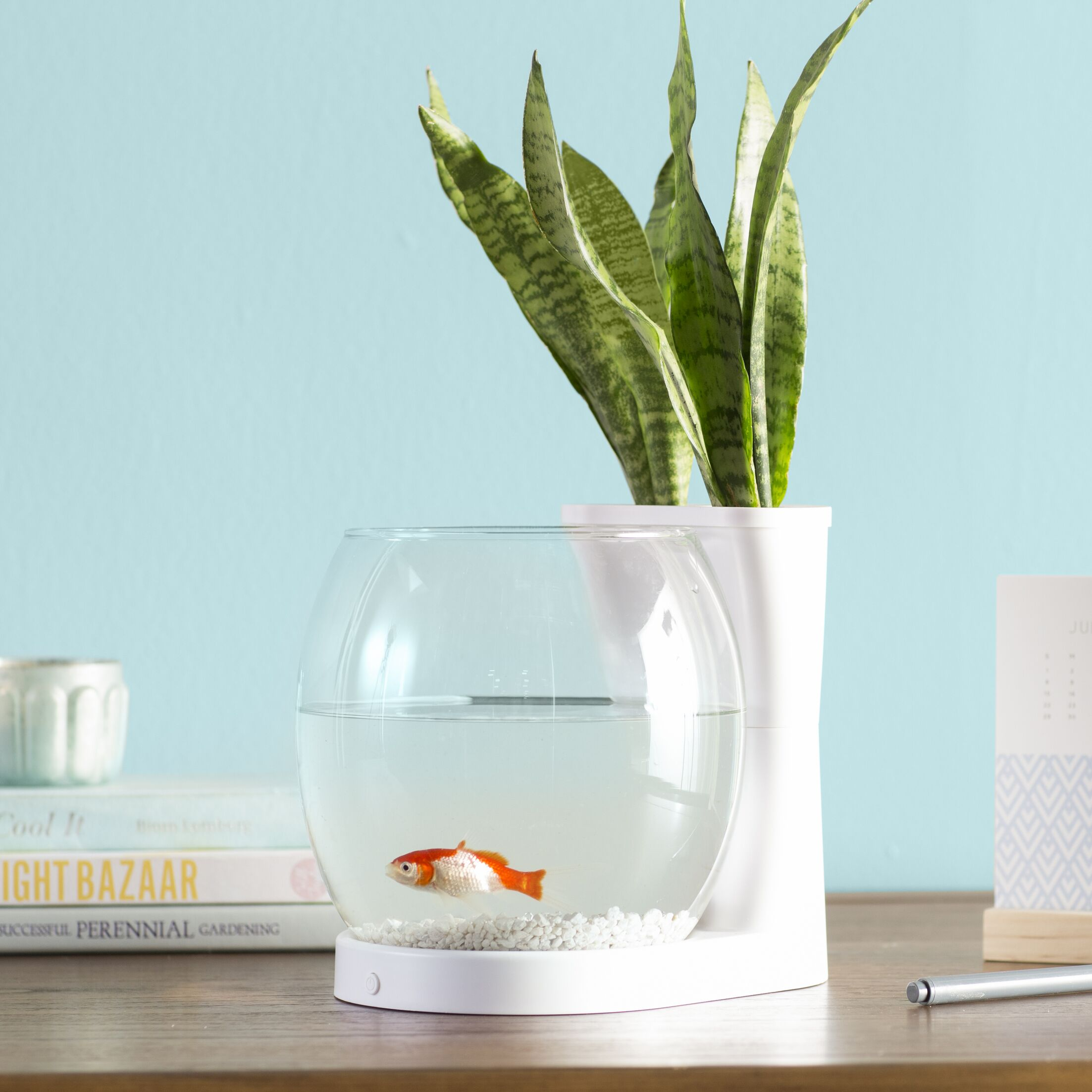 Gordie 0.75 Gallon Betta Planter Aquarium Bowl Color: White