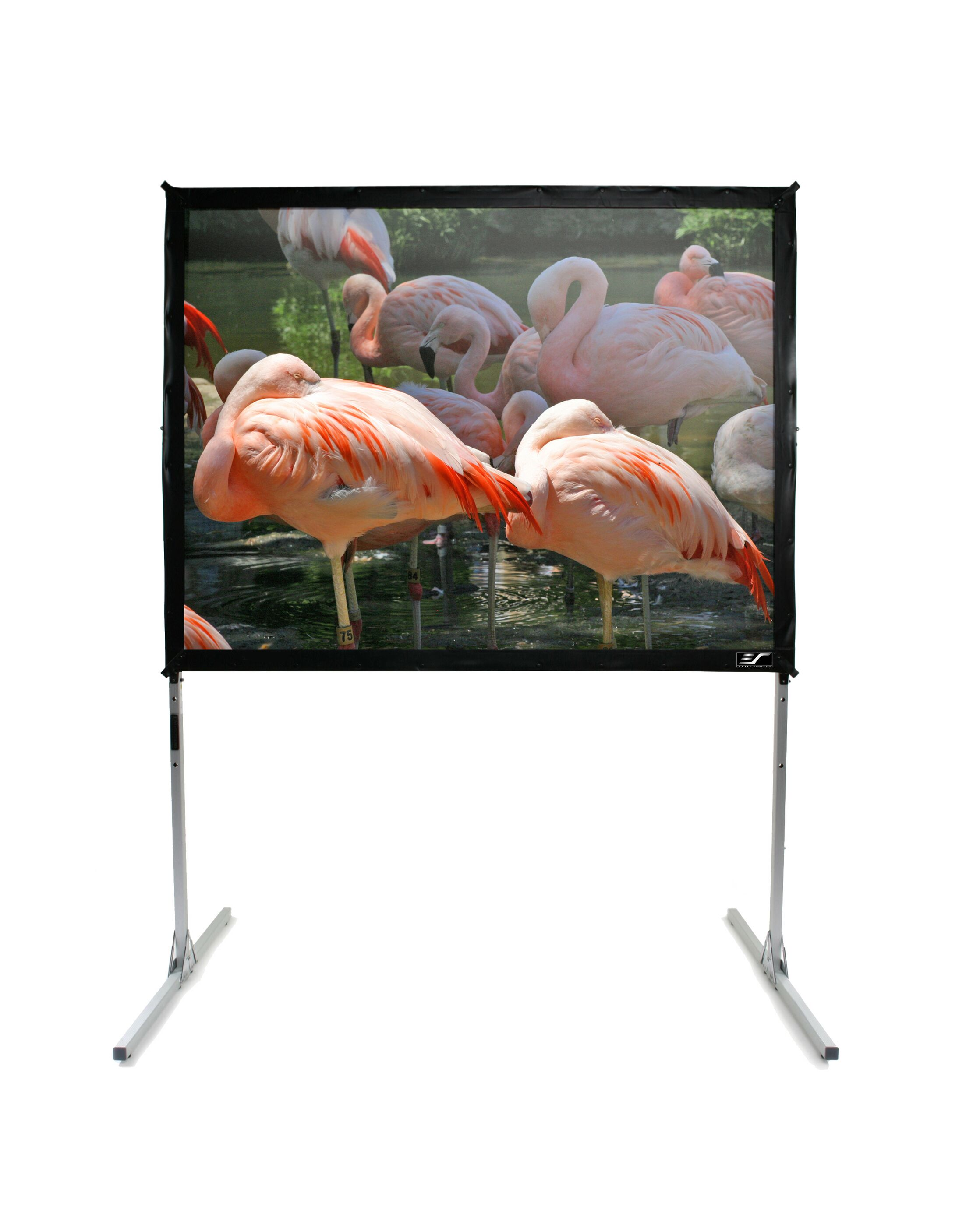White Portable Projection Screen Viewing Area: 275
