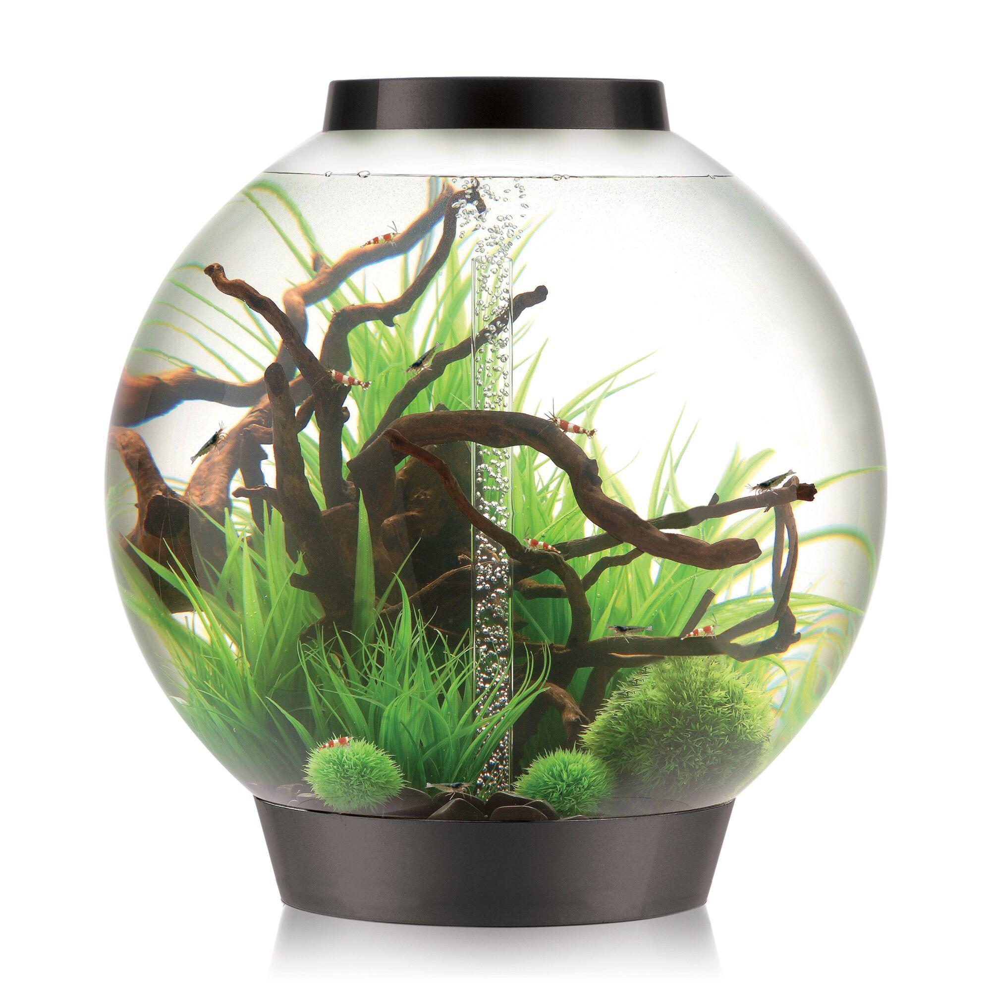 4 Gallon Classic Aquarium Bowl Color: Silver, Size: 12.5