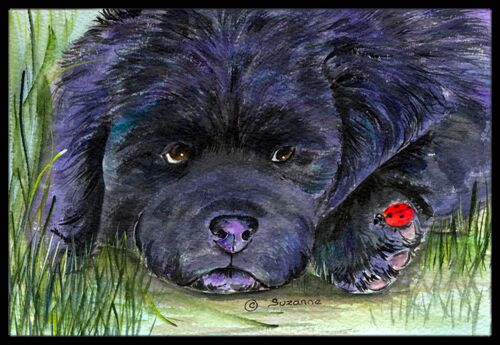Newfoundland Doormat Mat Size: Rectangle 2' x 3'
