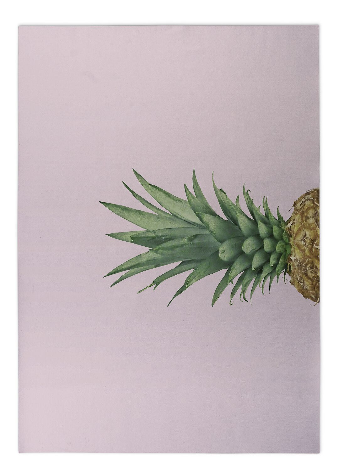 Giolou Pineapple Top Pink Indoor/Outdoor Area Rug Size: Rectangle 4' x 5'