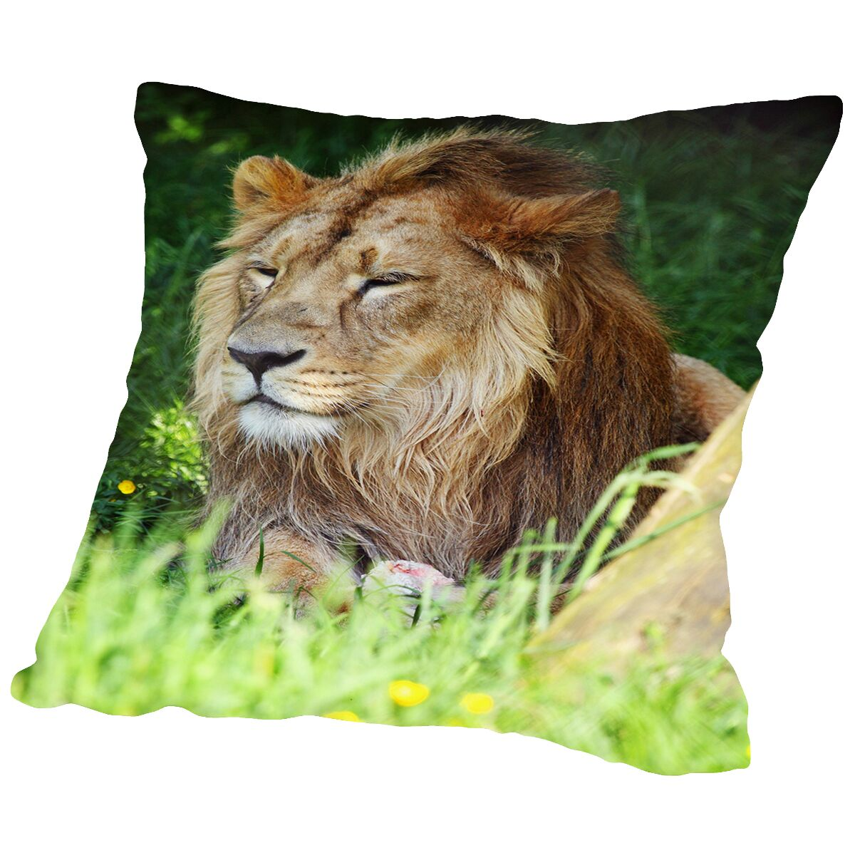 Wildlife Lion Cat Throw Pillow Size: 14