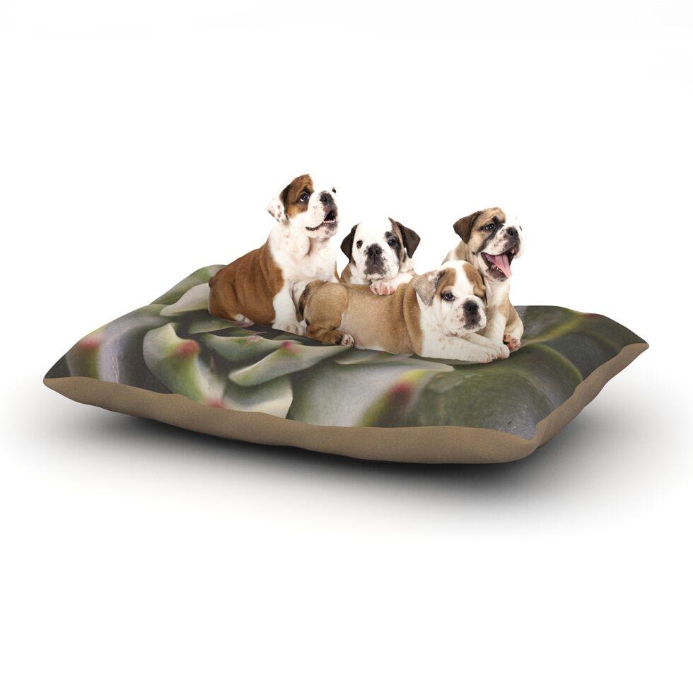 Debbra Obertanec 'Desert Succulent' Dog Pillow with Fleece Cozy Top Size: Small (40