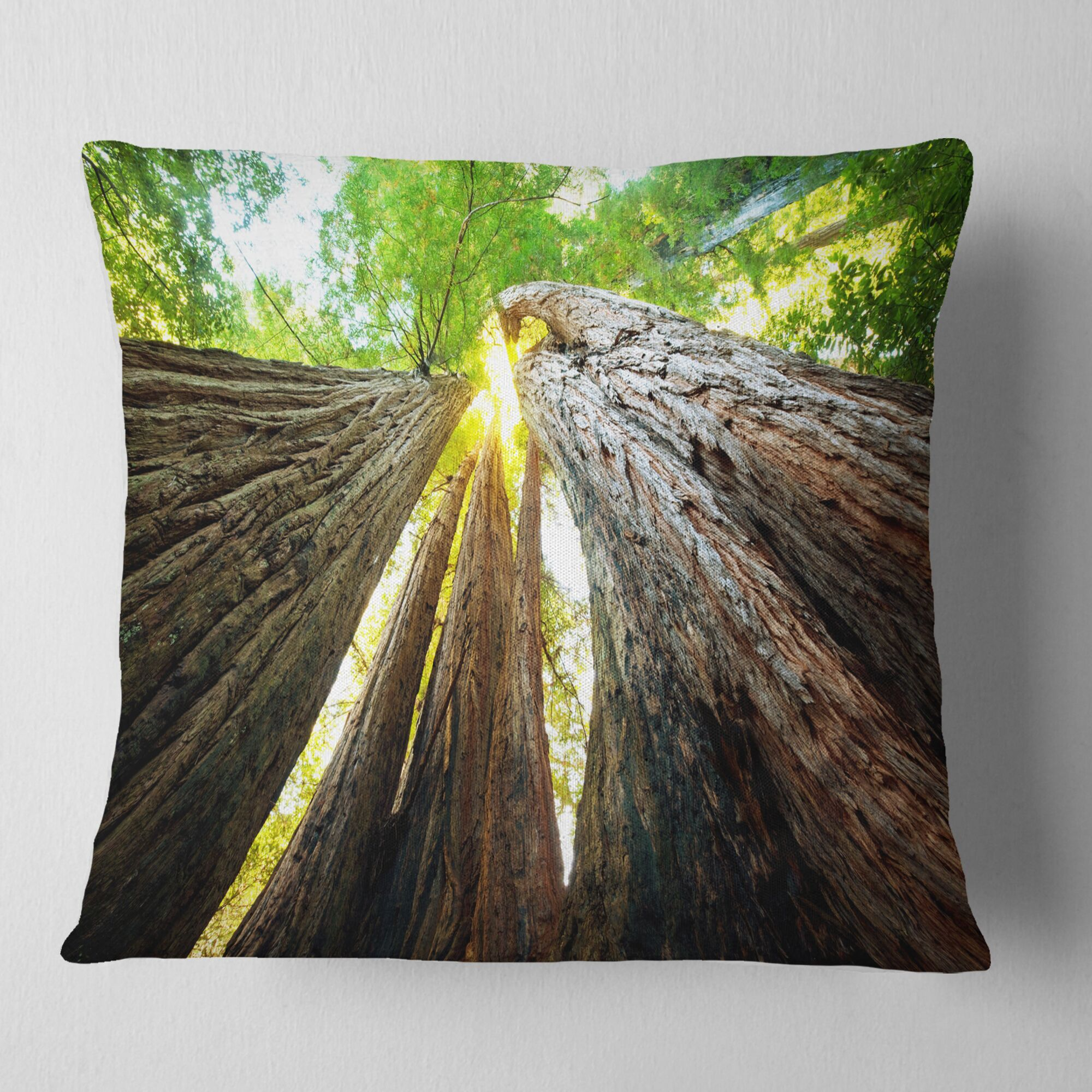 Photography Sequoia Tree Pillow Size: 18