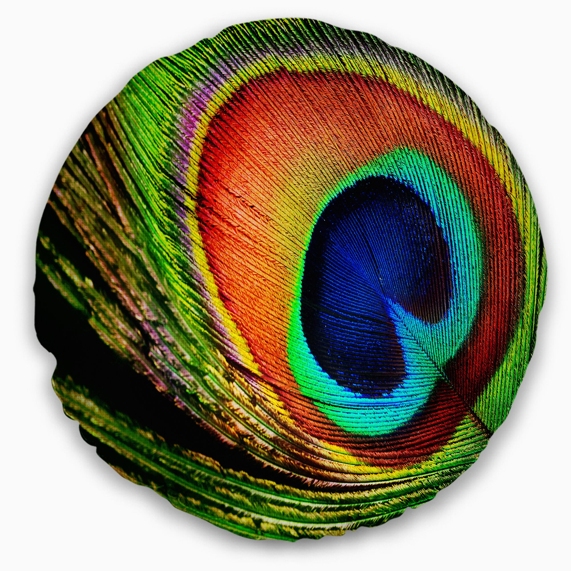 Photography Peacock Feather Throw Pillow Size: 20