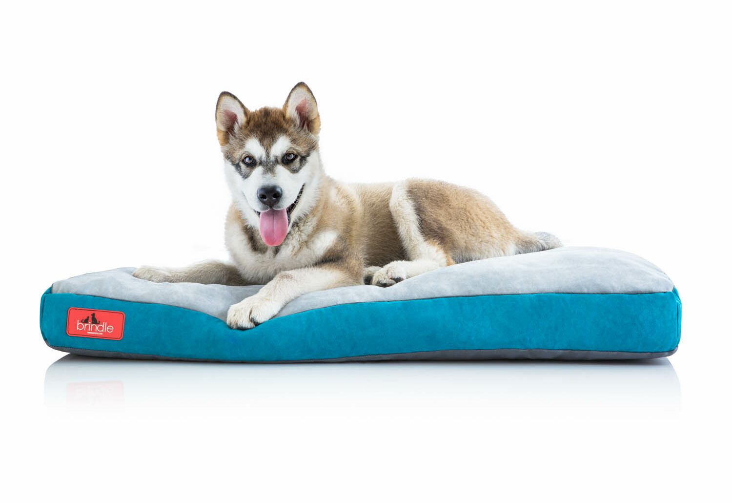 Soft Shredded Memory Foam Pet Bed Size: Extra Small (17