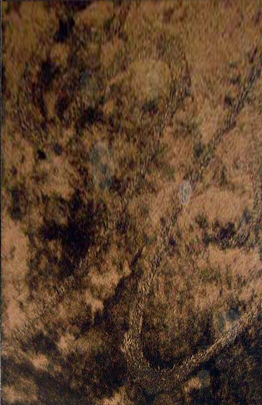 Mohammed Brown Area Rug Rug Size: 5'3