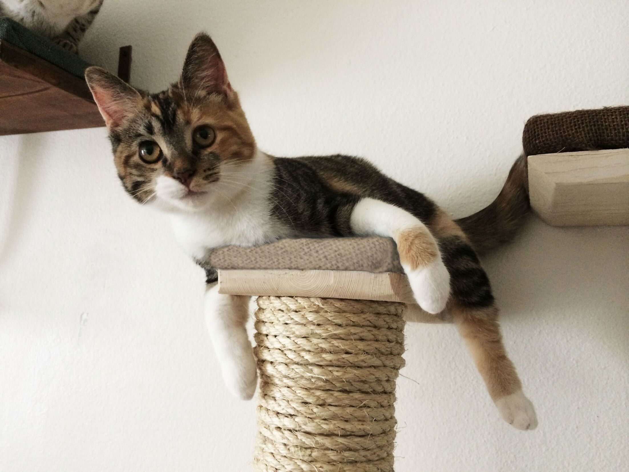 Vertical Sisal Scratching Post Color: English Chestnut