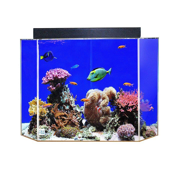 Aquarium Tank Color: Sapphire Blue Back, Size: 20