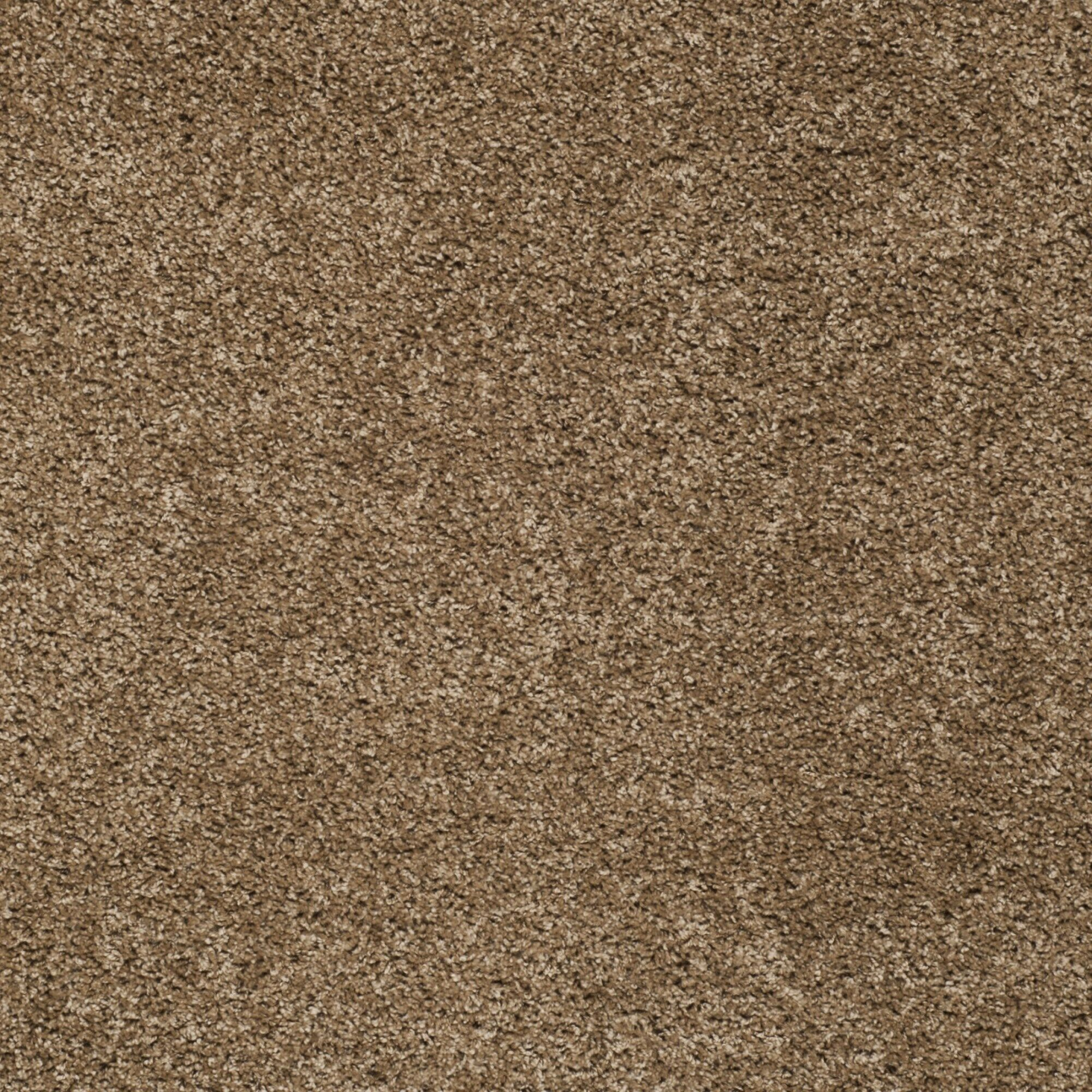 Helsel Dark Beige Area Rug Rug Size: Rectangle 5'1