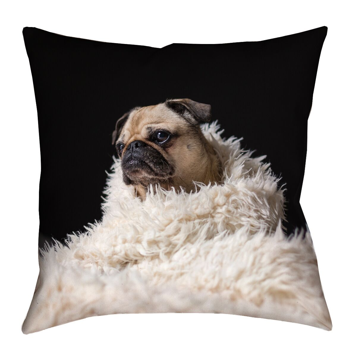 Karlos Pug in Blanket 100% Cotton Throw Pillow Size: 20