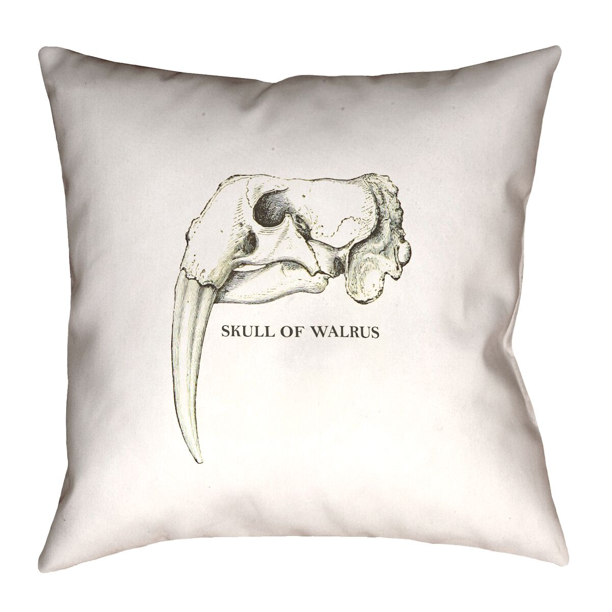 France Walrus Skull Throw Pillow Size: 20