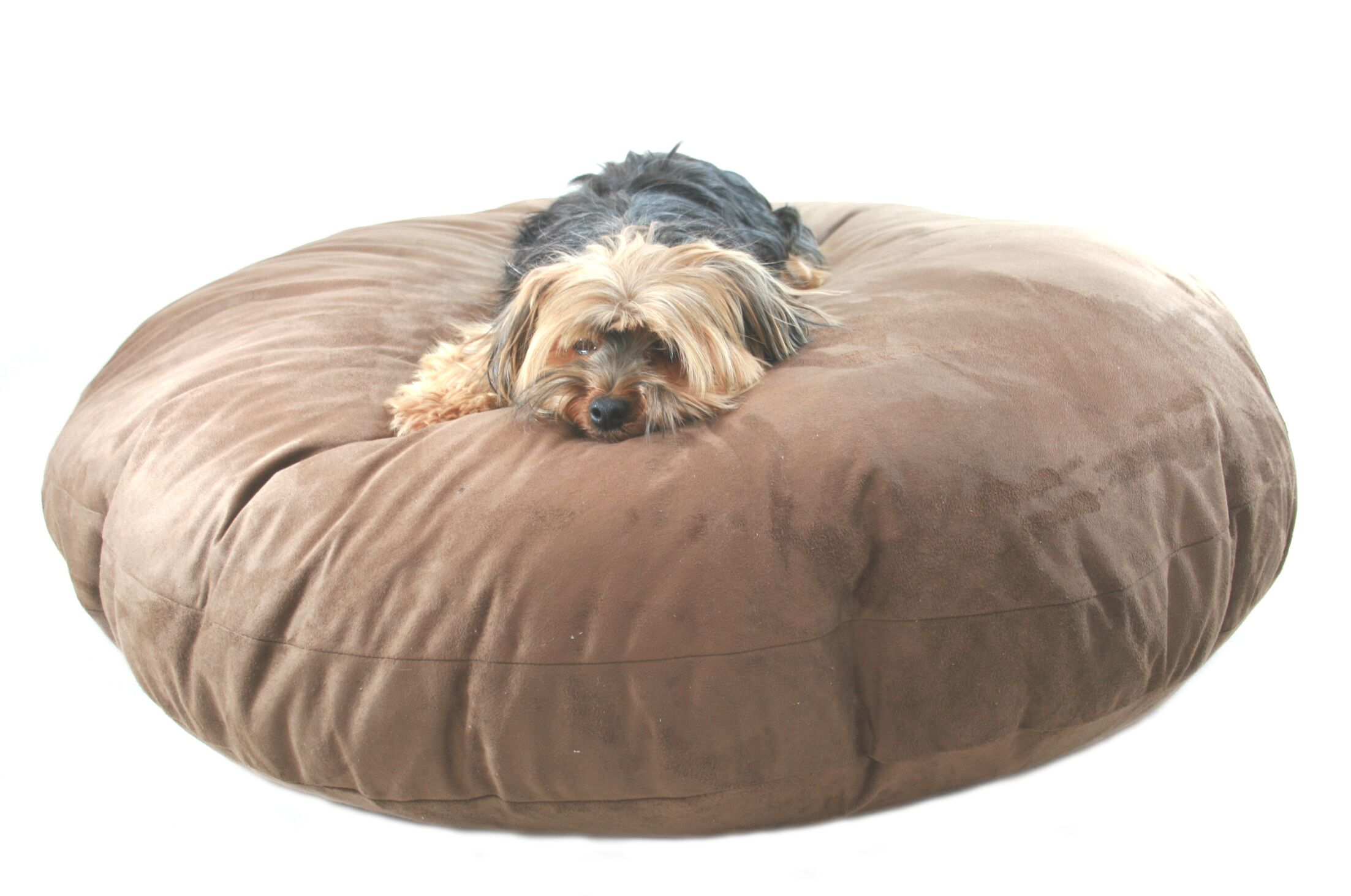 Maya Round Dog Pillow Size: Medium (27