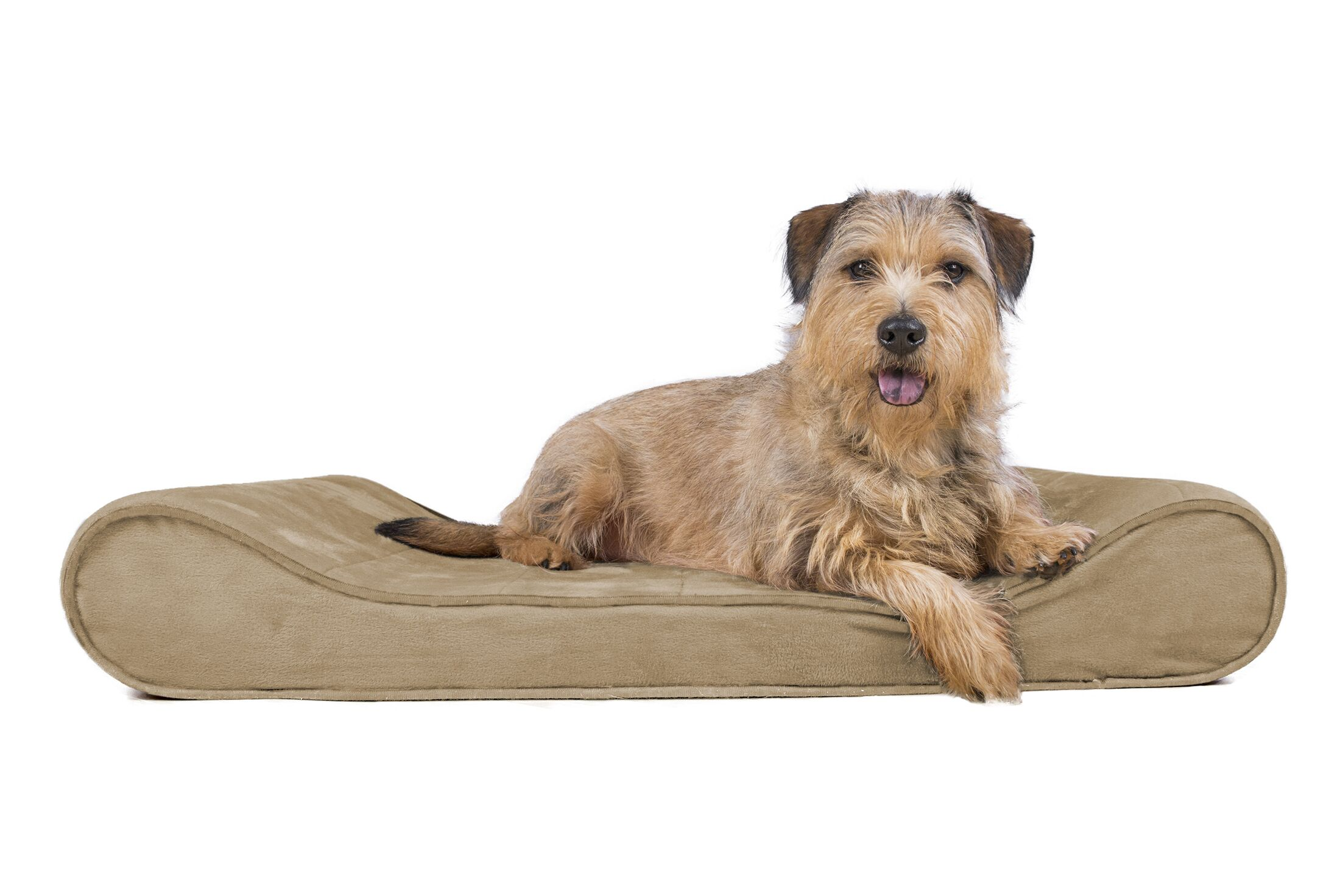 Goguen Microvelvet Luxe Orthopedic Dog Bed Size: Large (36