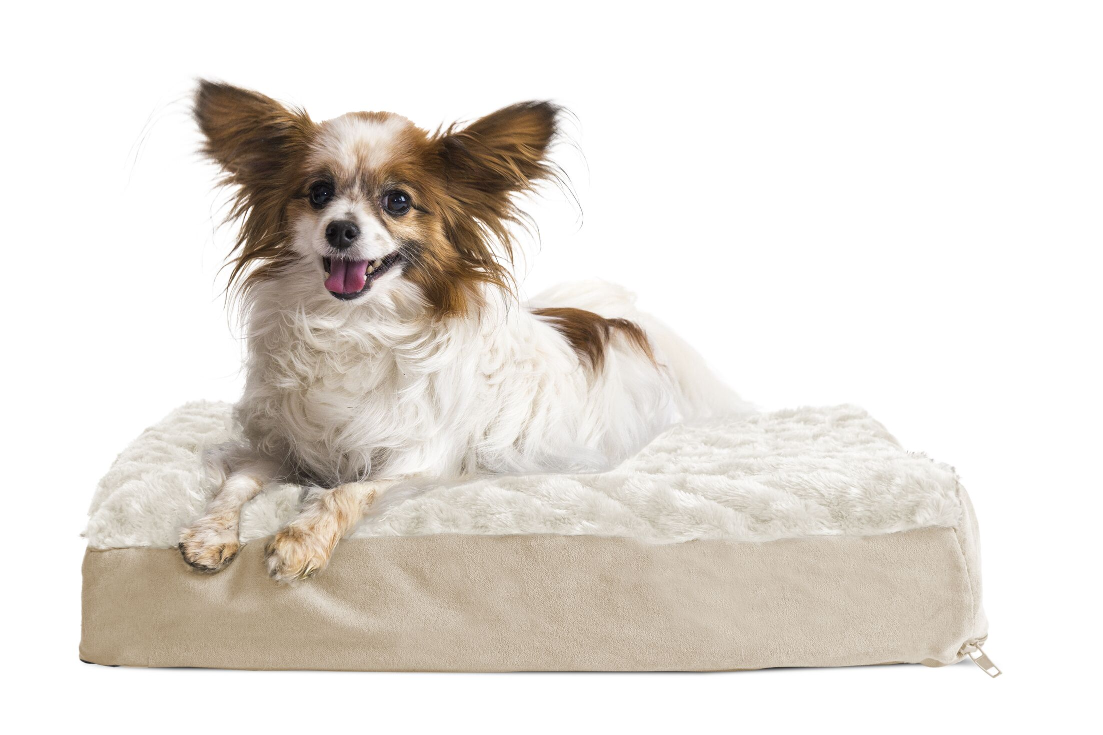 Ernie Ultra Plush Deluxe Ortho Pet Bed Color: Cream, Size: Small (20
