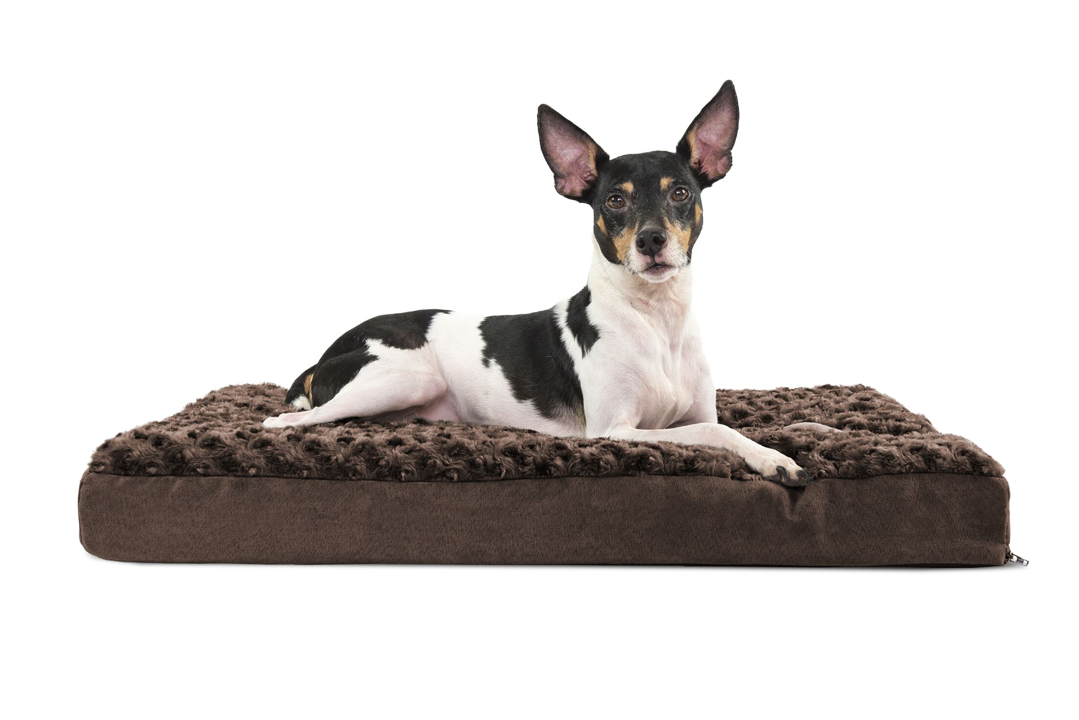 Ernie Ultra Plush Deluxe Memory Foam Dog Mat Color: Cream, Size: Large (36