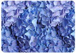 Fo Flor Flowers Doormat Mat Size: Rectangle 3'10