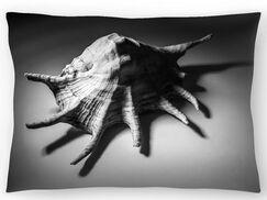 Shell Number 2 Lumbar Pillow Size: 14