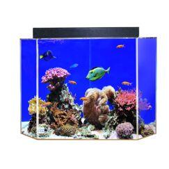 Aquarium Tank Color: Black Back, Size: 18