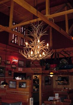 Attwood Antler Whitetail/Mule Deer Cascade 12-Light We have associated to option Chandelier Finish: Black/Natural Brown, Shade Included: No, Shade Color: No Shade