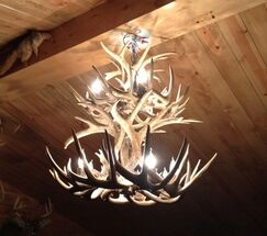 Doliya Antler Whitetail Double Tier 12-Light We have associated to option Chandelier Shade Included: No, Shade Color: No Shade, Finish: Rustic Bronze/Sunbleached
