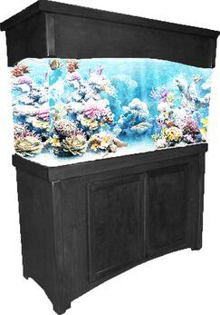 Calypso Birch Series Aquarium Stand Finish: Black, Size: 32.5