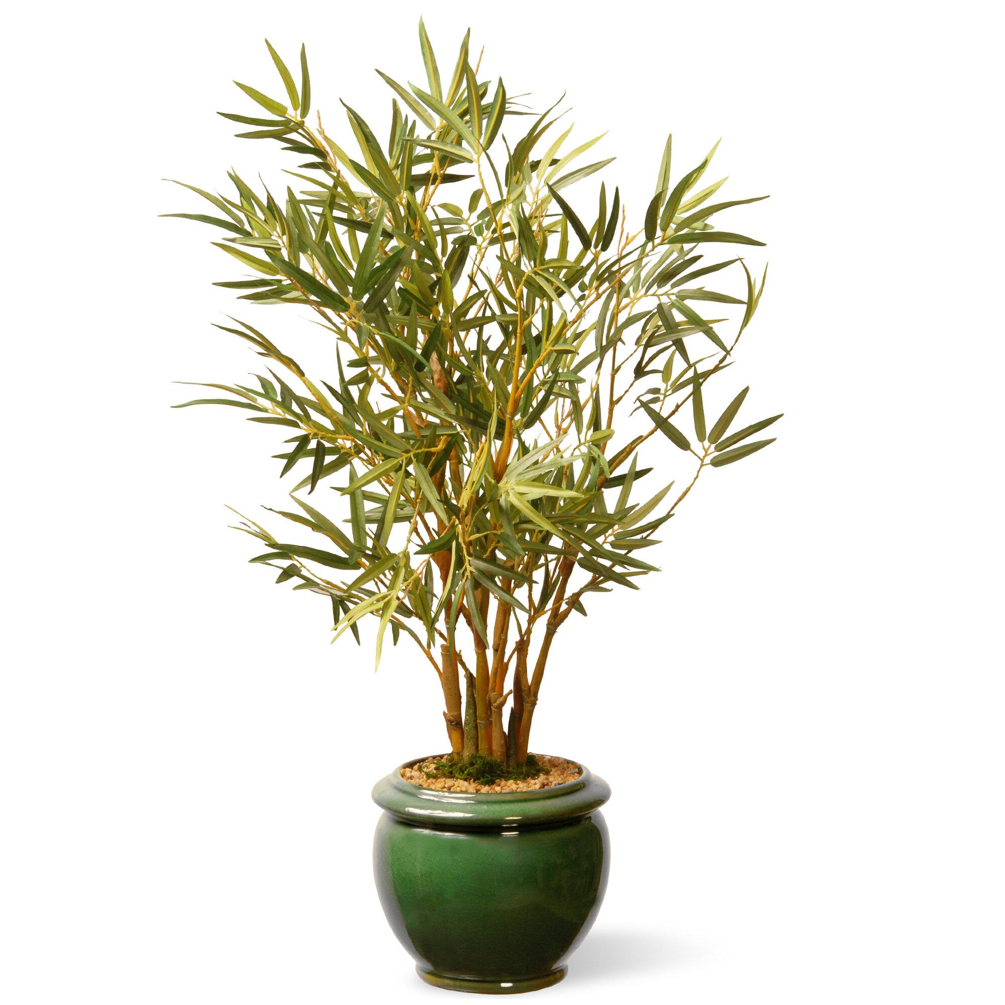 national tree co bamboo plant in pot ebay