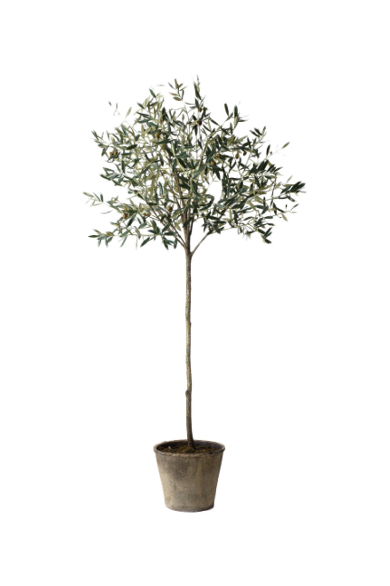 sage co potted olive tree in pot. Black Bedroom Furniture Sets. Home Design Ideas