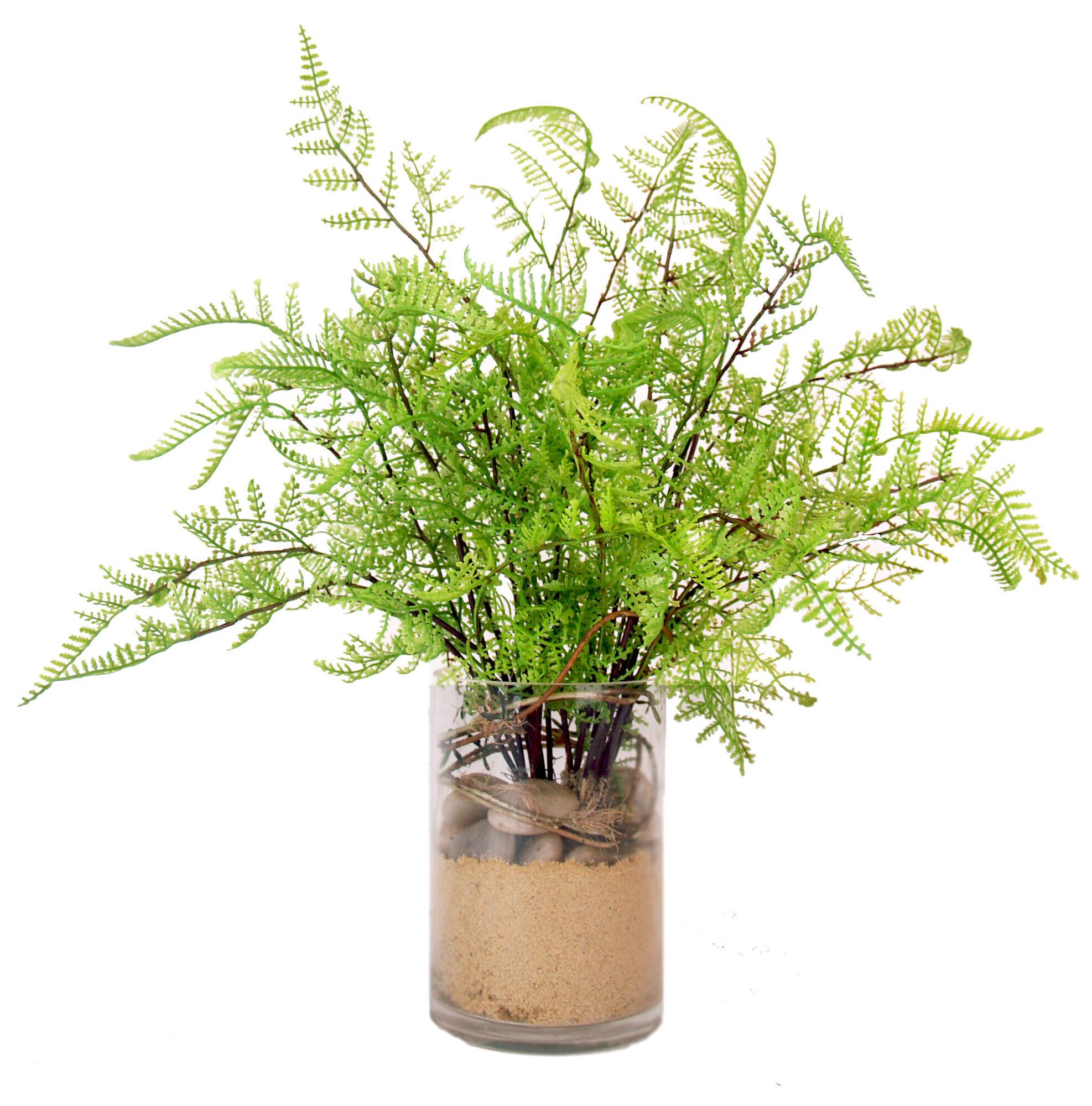 Creative displays inc cedar fern plant in pot ebay for Baby fern plant