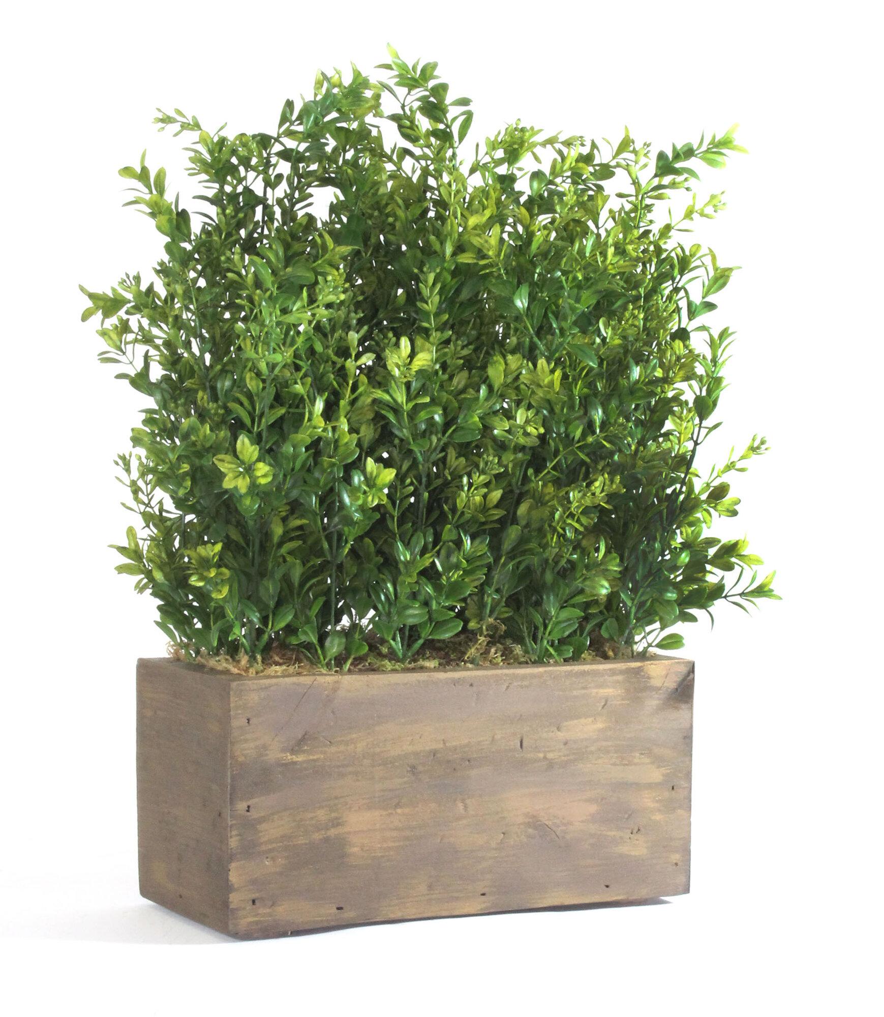 Dalmarko Designs Small Table Top Boxwood in Wood Planter | eBay