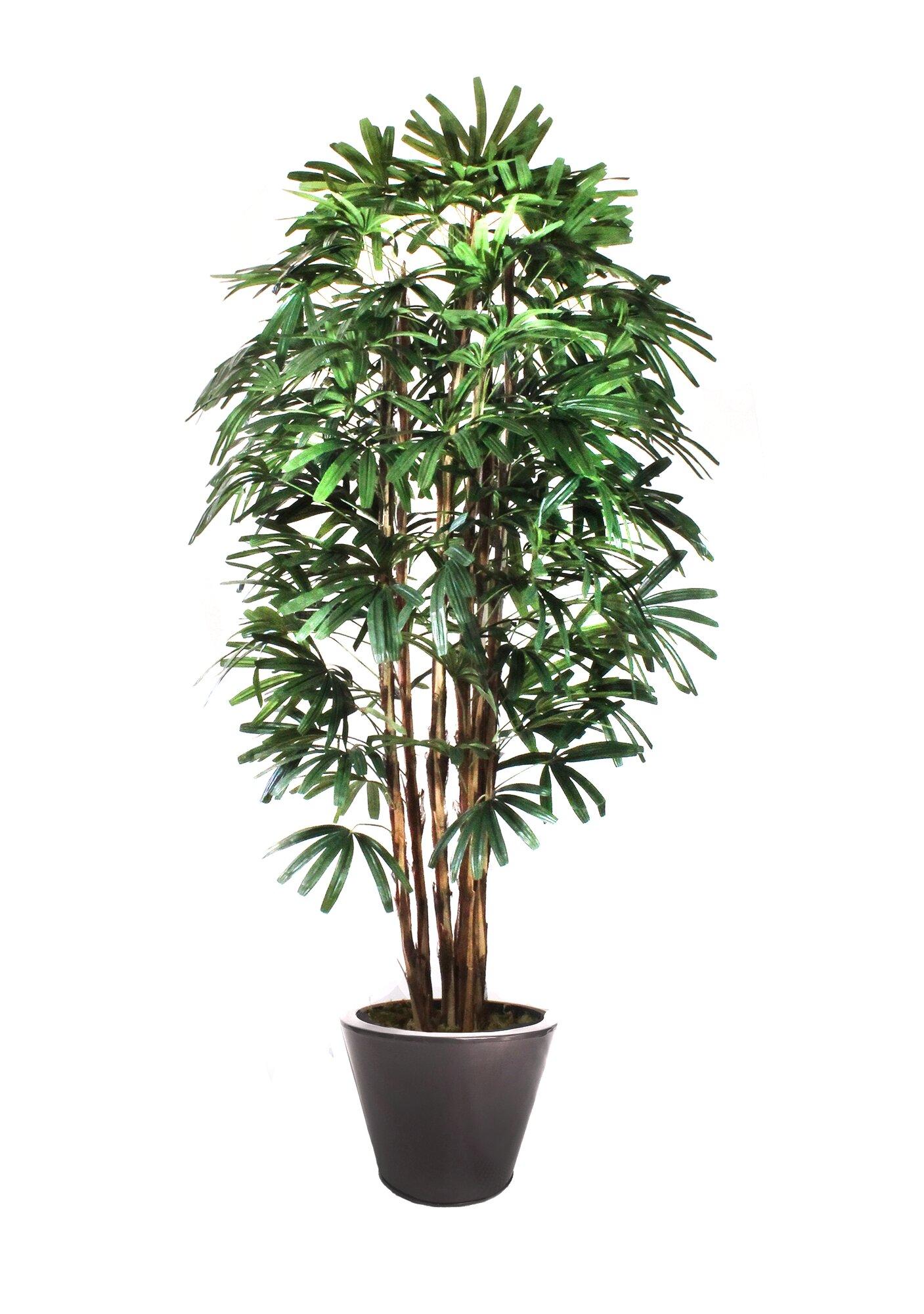 Dalmarko Designs Rhapis Palm Tree In Planter