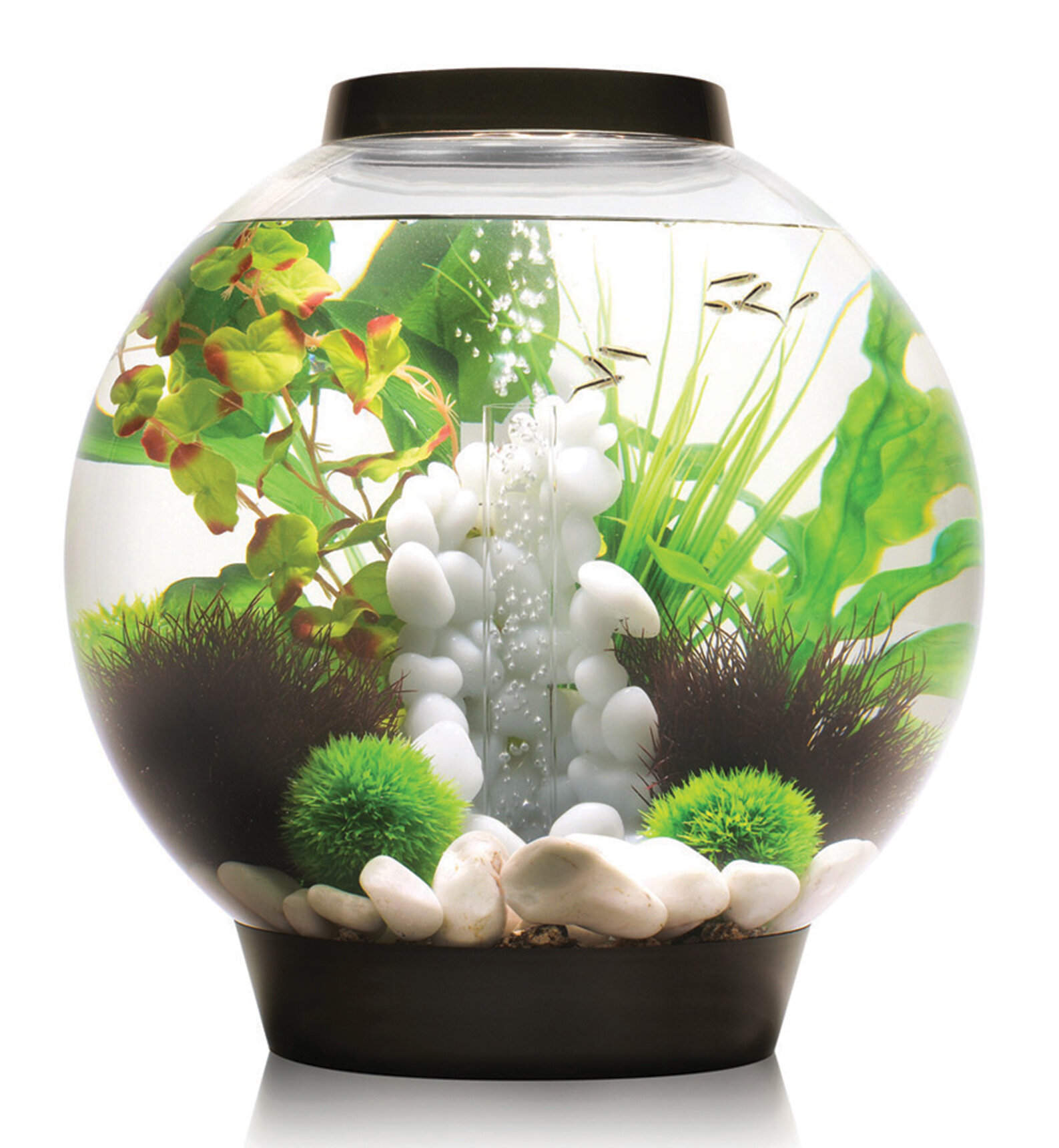 biorb classic aquarium bowl ebay. Black Bedroom Furniture Sets. Home Design Ideas