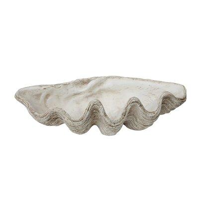 Beachcrest Home Seashell Sculpture Decorative Furniture