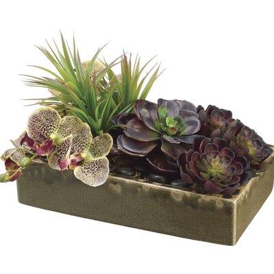 Echeveria Phalaenopsis Orchid Yucca Ceramic Container 488 Product Image